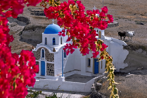Chapel at Santorini and little donkeys Photograph by Photo By Dimitrios Tilis