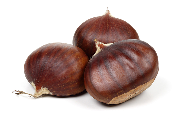Chestnuts isolated on white background Photograph by MahirAtes