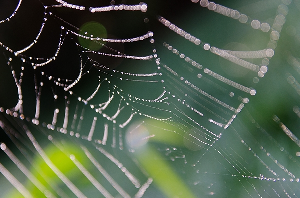 Close Of Spider Web With Dew Photograph by Roman Pretot / EyeEm
