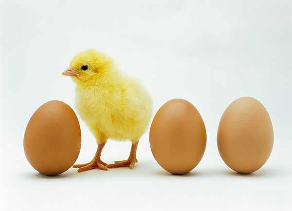 Close-up Of A Chicken Standing Between Whole Eggs Photograph by Stockbyte