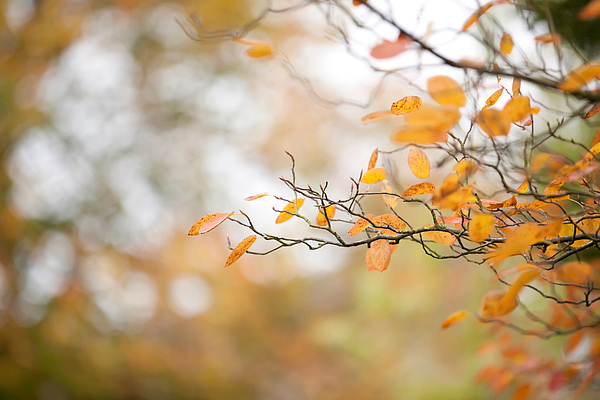 Close-Up Of Autumn Leaves Against Blurred Background Photograph by Paulien Tabak / EyeEm