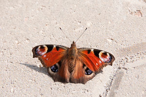 Close-Up Of Butterfly On Wall Photograph by Piotr Hnatiuk / EyeEm