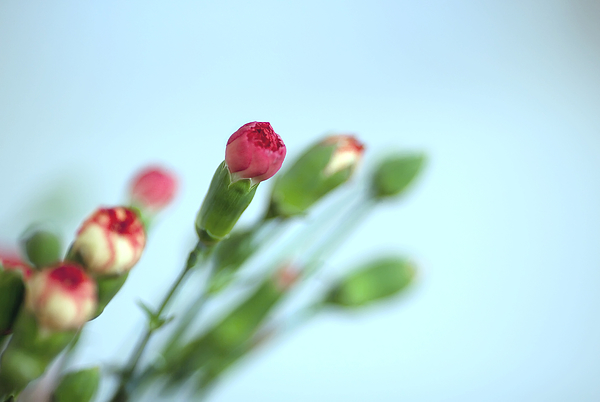 Close-Up Of Flower Against Clear Sky Photograph by Paulien Tabak / EyeEm