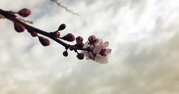 Close-Up Of Flower Buds Photograph by Paulien Tabak / EyeEm