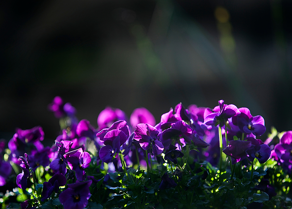 Close-Up Of Flowers Against Blurred Background Photograph by Paulien Tabak / EyeEm