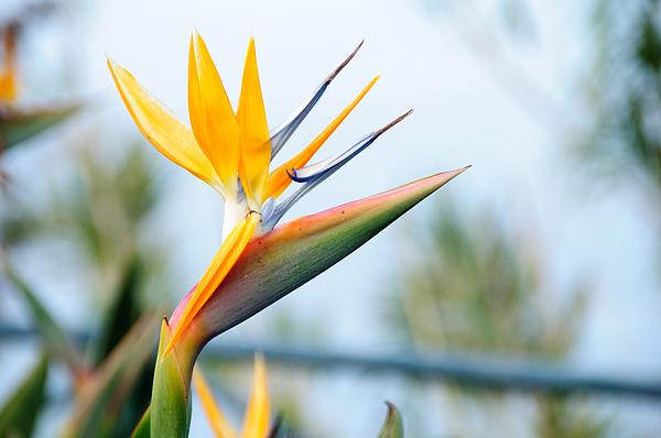 Close-Up Of Flowers Photograph by Piotr Hnatiuk / EyeEm