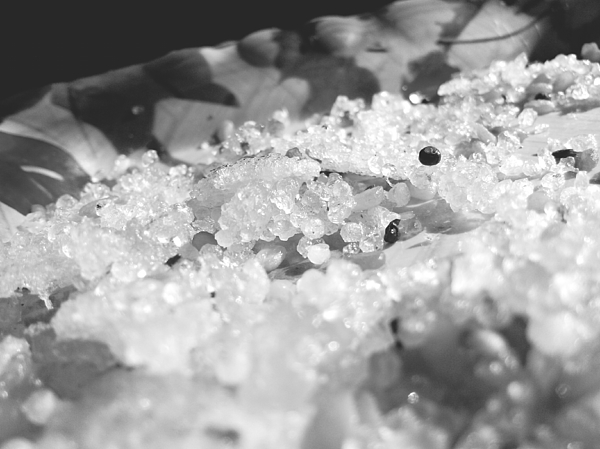 Close-Up Of Food In Tray Photograph by Subashbabu Pandiri / EyeEm