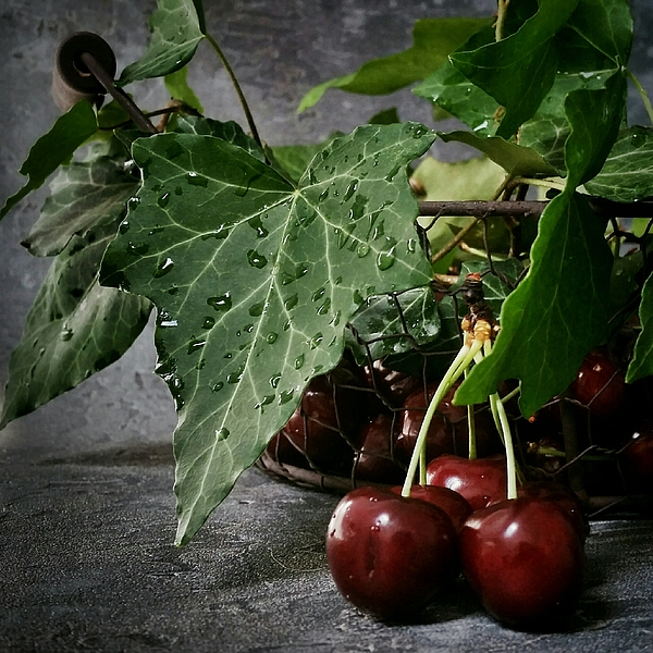 Close-up Of Fresh Red Cherries In Basket With Water Drops Photograph by Agnieszka Domanska / EyeEm
