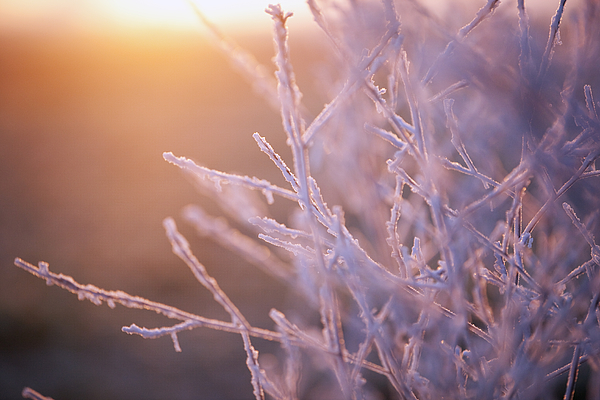 Close-Up Of Frozen Plant During Winter Photograph by Paulien Tabak / EyeEm