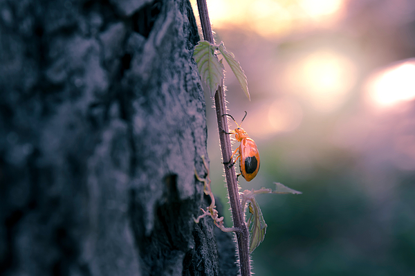 Close-Up Of Insect On Plant By Tree Trunk During Sunset Photograph by Apichart Tangcharoenbamroongsook / EyeEm