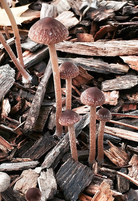 Close-Up Of Mushrooms In Forest Photograph by Katie Jordan / EyeEm