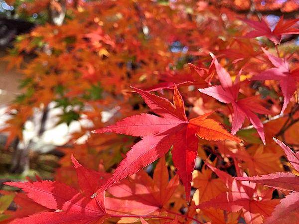 Close-Up Of Orange Leaves Photograph by Yuki Nishinaka / EyeEm
