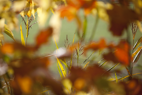 Close-Up Of Plants Photograph by Paulien Tabak / EyeEm