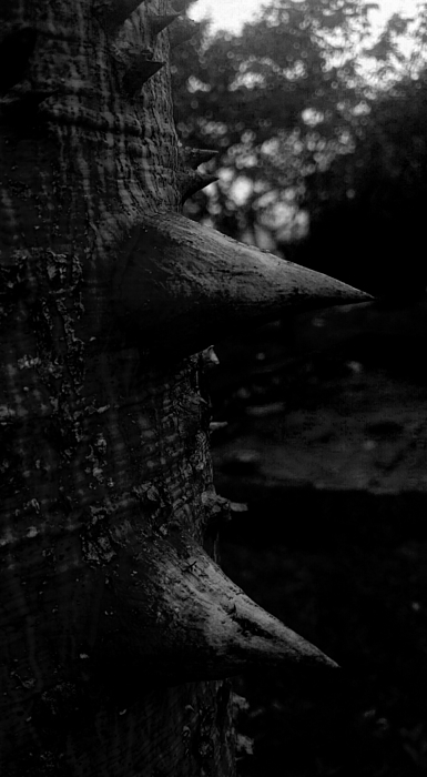 Close-up Of Thorns On Tree Trunk Photograph by Juvenal Passos / EyeEm