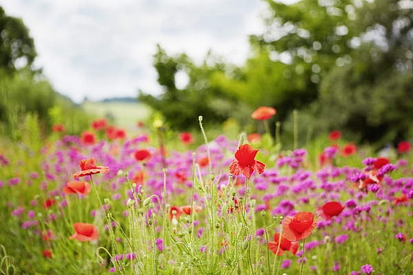 Close up of wildflowers in field Photograph by Cultura RM Exclusive/Stephen Lux