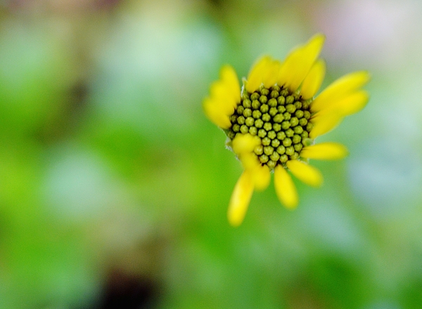 Close-up Of Yellow Flower Blooming Outdoors Photograph by Lisa Kehoffer / EyeEm