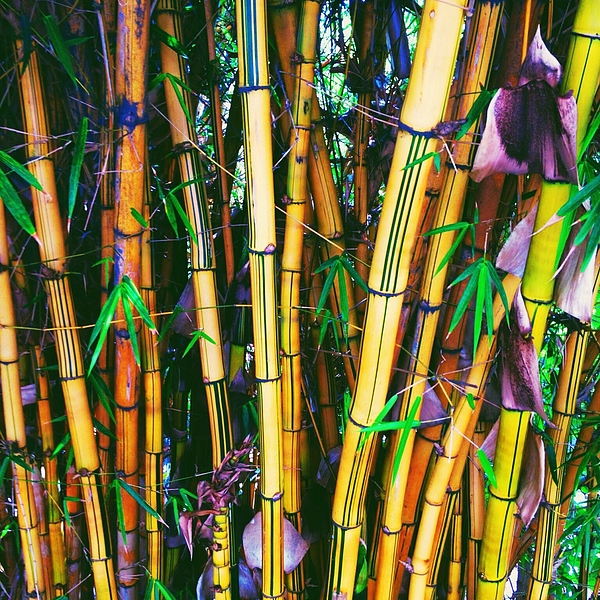 Close-Up View Of Bamboo Photograph by Ashley Kranz / EyeEm