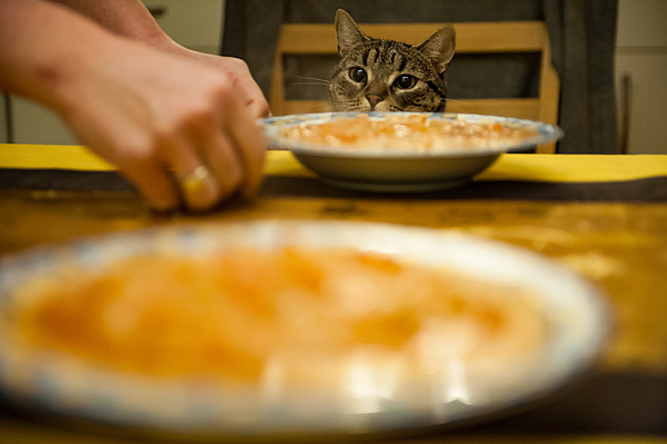 Cropped Hands By Soup In Plates Against Cat At Home Photograph by Piotr Hnatiuk / EyeEm