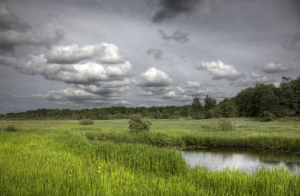 Darks Skies Over Marshy Grassland Photograph by Theasis