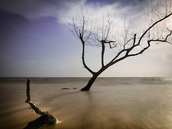 Dead tree Photograph by Bernd Schunack
