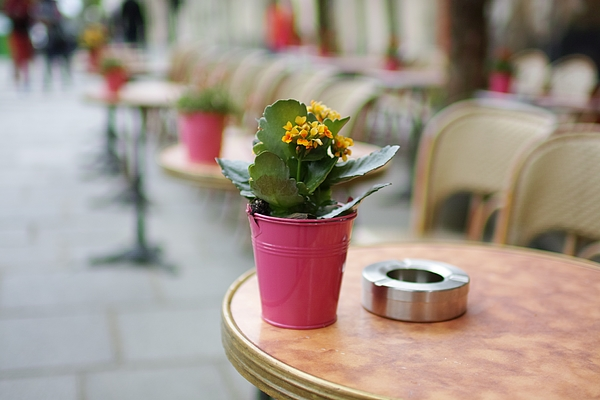 Decorative flower on table in a Parisian street cafe Photograph by Jacques Julien