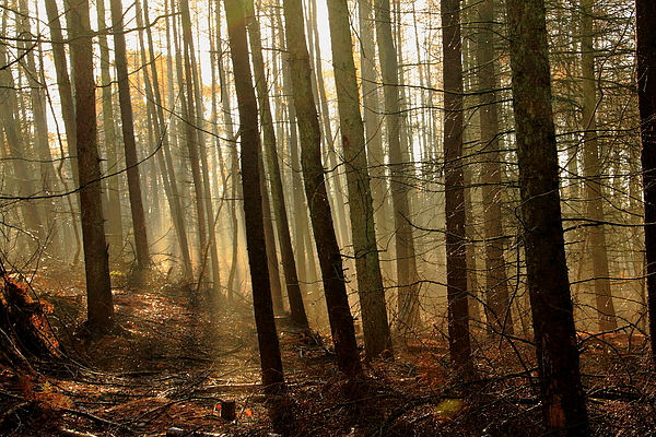 Delamere Forest Photograph by Dave Griffiths (Wrexham)