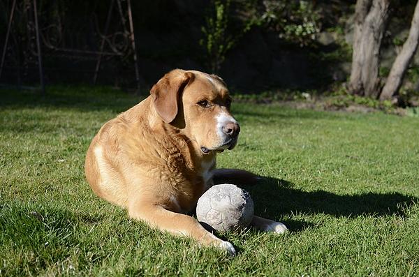 dog Photograph by Avatarmin