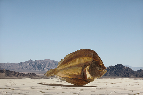 Dried Fish in Desert Photograph by Paul Taylor