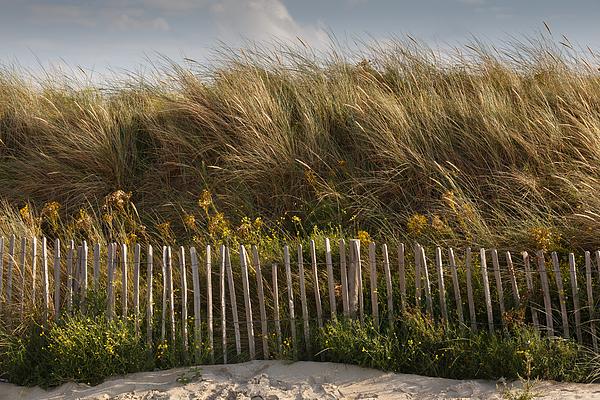Dune fence Photograph by Paul Indigo