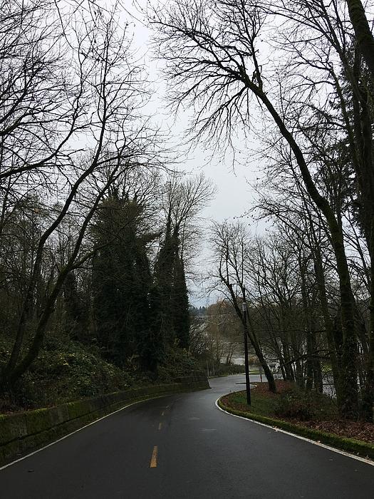 Empty road in bare tree Photograph by Andrew Roe / FOAP
