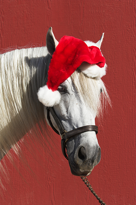 Equine Santa Horse Funny Clause Red Christmas Photograph by 66North