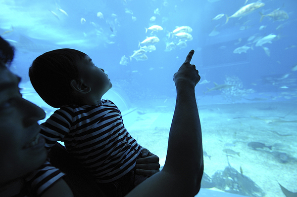 Father with his son watching fish aquarium Photograph by Hideki Yoshihara/Aflo
