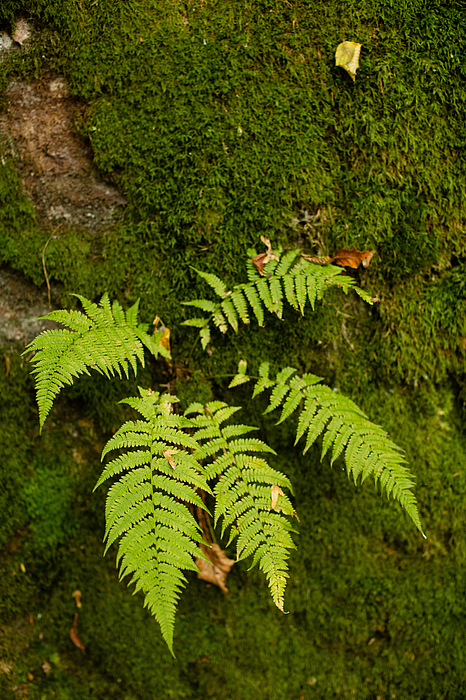 Fern And Moss In The Forest Photograph by Giuseppe Zanoni