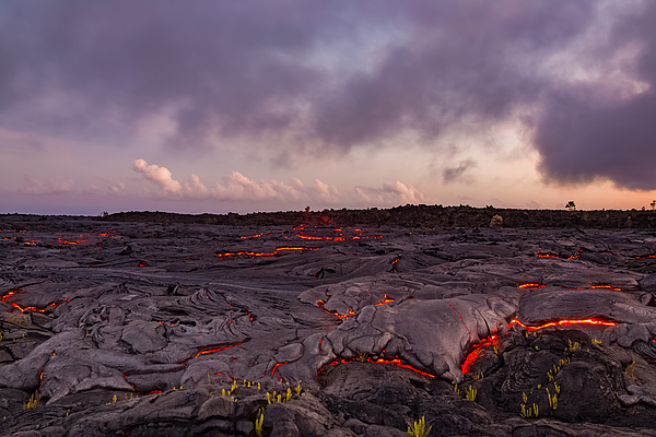 Finger of lava approaches plants Photograph by Tyler Hulett