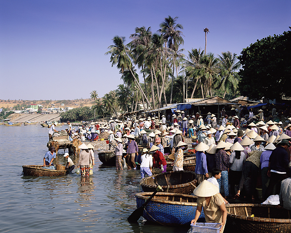 Fishing Village People Collecting The Morning Catch From Fishing Boat Fleet, Mui Ne, South-central Coast, Vietnam, Indochina, Southeast Asia, Asia Photograph by Gavin Hellier / robertharding