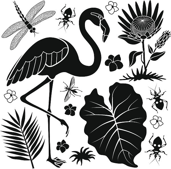 Flamingo And Taro Leaf Drawing by Kathykonkle