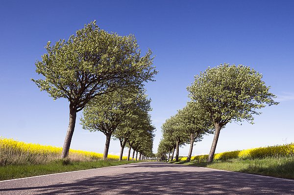 Flowering Trees And Fields Photograph by Bernd Schunack