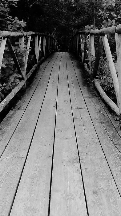 Footbridge Amidst Trees In Forest Photograph by Tony Jones / EyeEm
