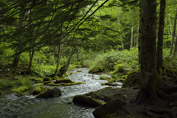 Forest Mountain Stream Photograph by Photo taken by Bong Grit