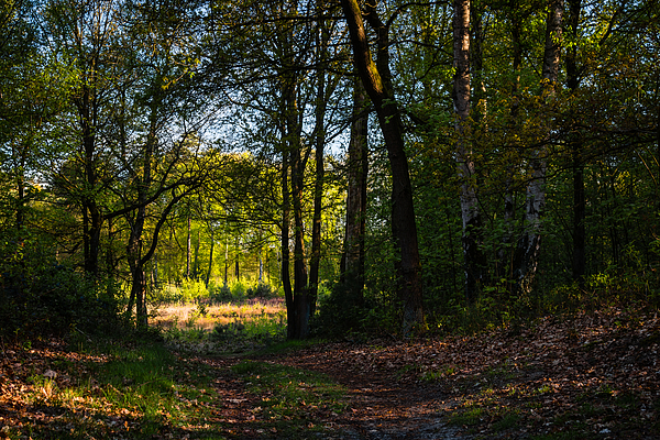Forest Path Into The Light Photograph by William Mevissen