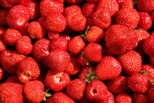 Fresh ripe strawberries newly picked Photograph by Pejft