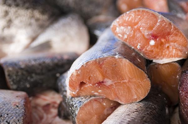 Fresh Salmon Photograph by Kazuko Kimizuka