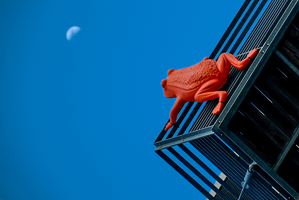 Frog riding up to the moon Photograph by Dominique Massonnaud