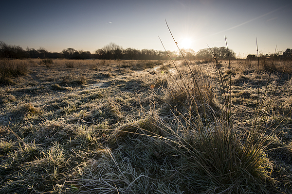 Frosty landscape Photograph by Ray Wise