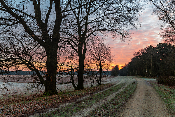 Frosty Path Photograph by William Mevissen