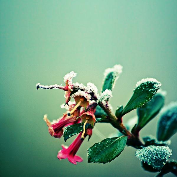 Frosty urban acid trumpet bokeh Photograph by s0ulsurfing - Jason Swain