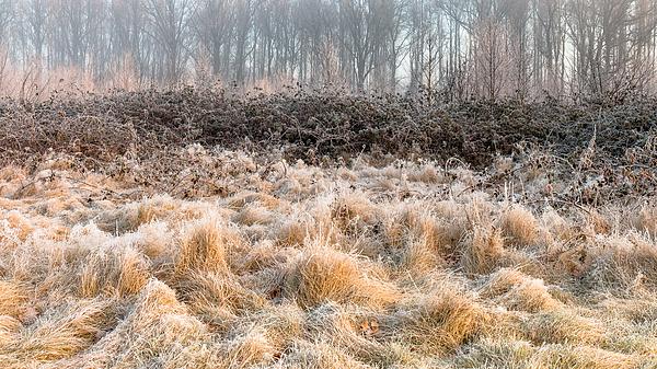 Frozen Grasses Photograph by William Mevissen