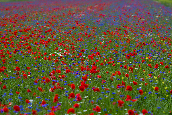 Full Frame Shot Of Multi Colored Flowers Photograph by Claudia Giusti / EyeEm