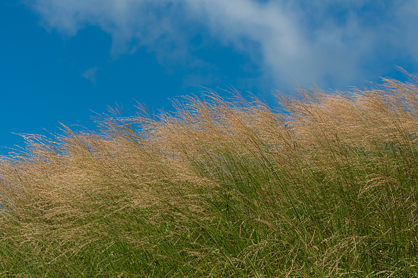 Grass field with blue sky Photograph by Witchaphon Saengaram