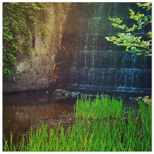 Grass Growing By Waterfall Photograph by Jenny Lauretano / EyeEm